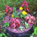 large container of mostly coleus when first planted in May