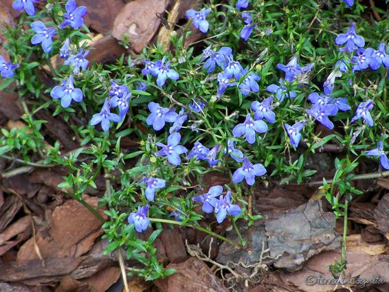 Tiny Flowers Names Field Scabious The Are And They