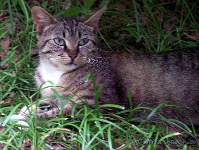 one stray cat