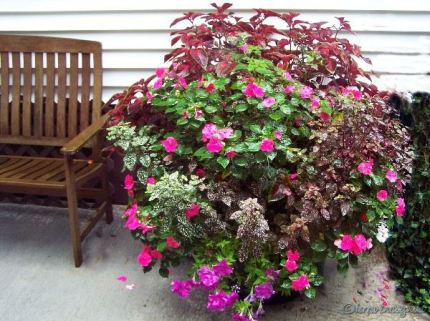 large container filled with annuals