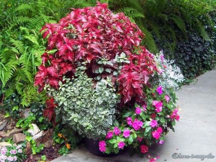 second large container of mixed annuals