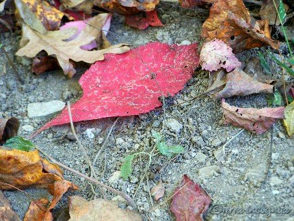 colorful leaves fallen onto dry soil