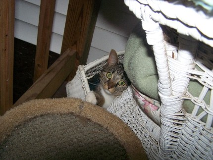 Bonnie hiding in a basket during the storm