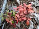 tiny shrub at edge of woods