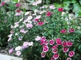 whites and dark pinks