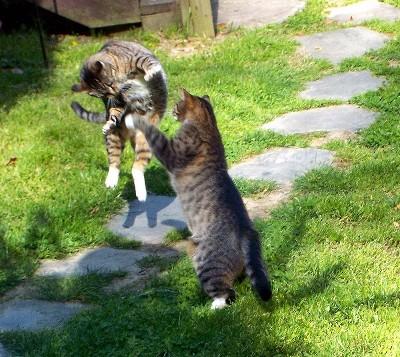 Mama-Kitty and Bonnie