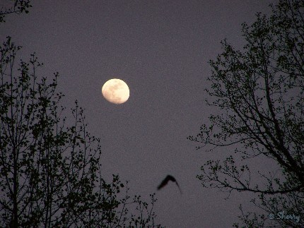 a bat and the moon