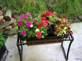 impatiens and coleus