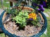 wave petunia and marigolds