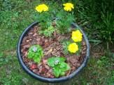 yellow marigolds and purple ageratum
