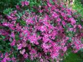 loads of flowers