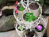 herb planter with rooted cuttings