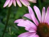 green bug on flower petal