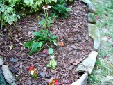 begonias and coneflowers at left edge