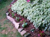 begonia seedlings planted on outer edge of border