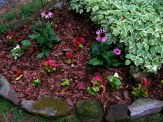 coneflowers and begonias