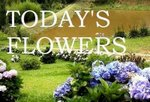 Today's Flowers