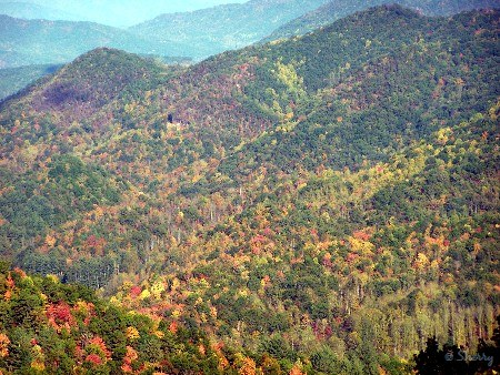 fall color in the mtns