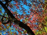 colorful leaves and blue sky