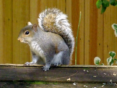 squirrel on top of wooden feeder