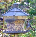 tufted titmice at feeder