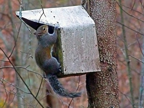 gray squirrel on birdhouse