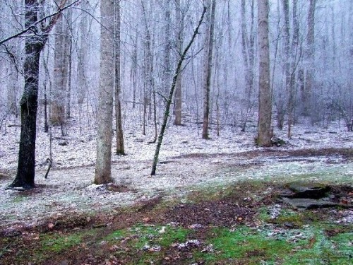 snow falling in the woods