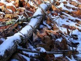 snow on log and leaves