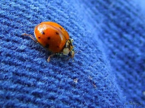 ladybug on my jeans