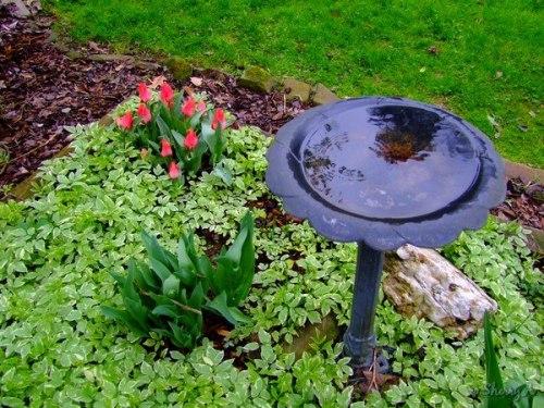 bird bath flower bed