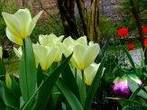 tulips and gazing ball