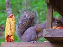 prefers the peanuts