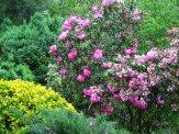 shrub border