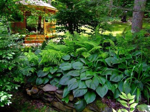 hostas and ferns and gazebo