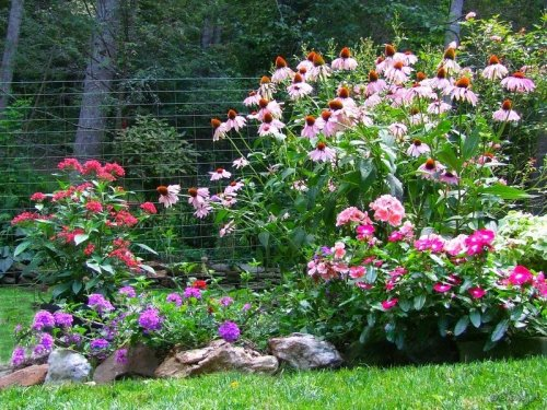 mixed annuals and perennials