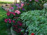vinca, geraniums and bishop's weed