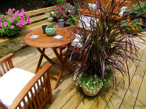 fountain grass and alyssum in a container