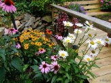 shasta daisies, coneflowers and black eyed susans
