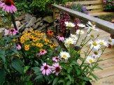 shasta daisies, coneflowers and black eyed susans