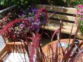 fountain grass flowers