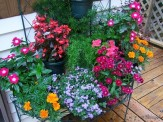 plant stand with annuals