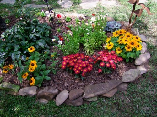 black eyed susans, mums and more