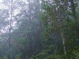 torrential rain falling