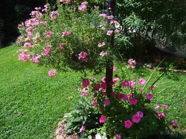Lamppost Flower Bed Sherry S Place
