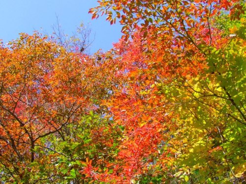 Sourwood, ash and dogwood trees