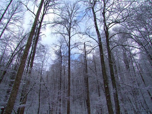 snowy woods in December