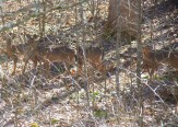 all four, well-camouflaged in the woods