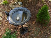iron birdbath and dwarf evergreen