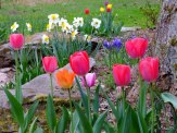 spring flowering bulbs in new flower bed