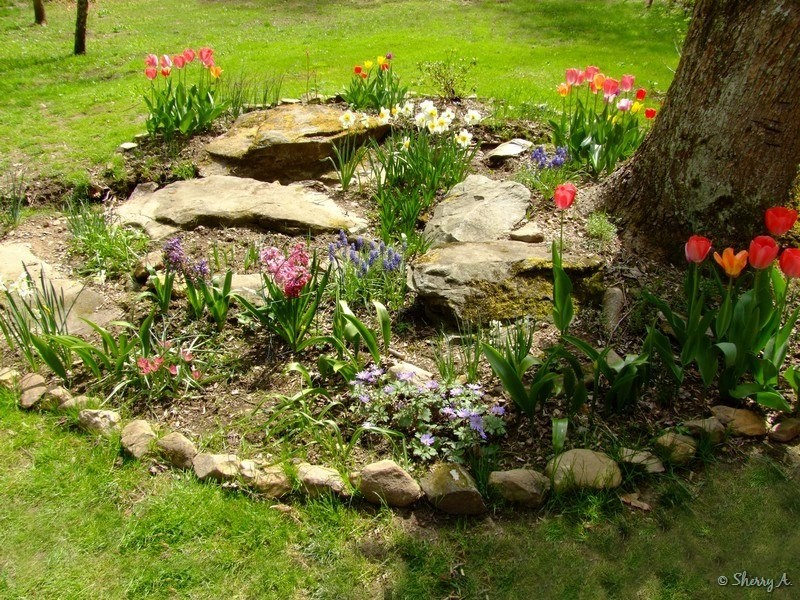 Spring Bulb Flower Bed Sherrys Place